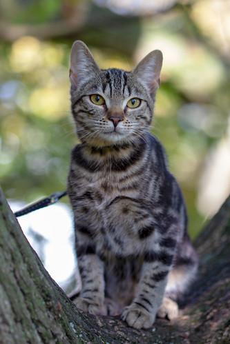 Cat in tree - Lola