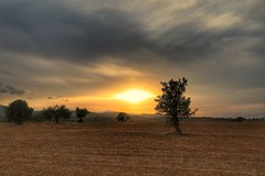 Sunset in Cyprus (8) (Polis Poliviou) Tags: nature green tree wood root agriculture plant outdoors cyprustheallyearroundisland cyprusinyourheart yearroundisland zypern republicofcyprus ©polispoliviou2018 polispoliviou polis poliviou πολυσ πολυβιου leaf field mediterranean oleaeuropaea sunsetincyprus flora grass environment healthy beauty afiap motherearth art agricultural soil texture rough postcard brunch grey brown season countryside organic ecology ecological winter lovecyprus autumn olivo ulivo sunlight light sun sunset sunrise fall