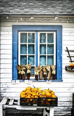 Fall in Ohio (Randy Durrum) Tags: fall ohio pumpkins corn blue window orange durrum nikon 5300