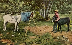 "Donkey Photography—""Look Pleasant"" (Alan Mays) Tags: ephemera postcards paper printed photographers photography cameras viewcameras tripods horses donkeys jackasses animals anthropomorphic anthropomorphism children boys posing illustrations humor humorous funny comic 1910 1910s geen blue brown antique old vintage typefaces type typography fonts"