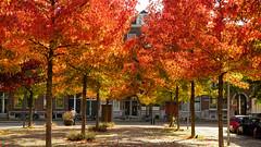 - City Autumn 2018 - (Jacqueline ter Haar) Tags: autumn 2018 herfst fall rotterdam trees bomen colours herfstkleuren