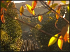 Talybont - 15th. (peterdouglas1) Tags: directrailservices valleyflasks talybont bangor class68 68002 68018 6d43 leaves autumncolours