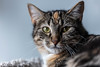 Javacats14Oct2018291.jpg