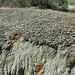 Big Blue Bentonite (Sentinel Butte Formation, Upper Paleocene; Coal Vein Trail, Roosevelt National Park, Little Missouri Badlands, North Dakota, USA) 8
