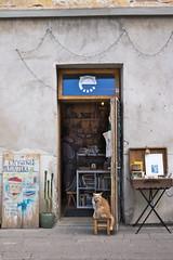 Mister the cat (oliviercatherine3633) Tags: chat porte rue librairie facade knygynas keistoteka vilnius lituanie