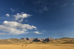 High Sky (Joost10000) Tags: yurt grass mountains mountain planes horse sky wild wilderness outdoors travel adventure kyrgyzstan asia centralasia lake sonkul canon canon5d eos clouds evening landscape landschaft natur nature