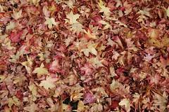 Autumn - Herbst (Hugo von Schreck) Tags: autumn herbst hugovonschreck canoneos5dsr blätter leaves tamron28300mmf3563divcpzda010