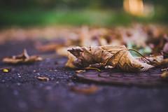Fallen Leaves (Eckehard Straßweg) Tags: autumn herbst natur nature blätter outdoor season oktober october street autumnleaves autumntime light licht bokeh