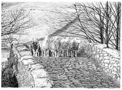 Herdwick Sheep on New Bridge, Borrowdale
