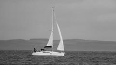 Sailing on an autumn day (byronv2) Tags: coast coastal beach portobello river riverforth rnbforth firthofforth forth sea northsea edinburgh edimbourg scotland boat ship sailing yacht sail blackandwhite blackwhite bw monochrome