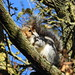 Squirrel trying to hide DSCN2848