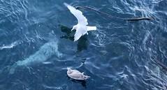 Ogden Breakwater (faye.nixon0114) Tags: coast ocean funny cute seagull seal