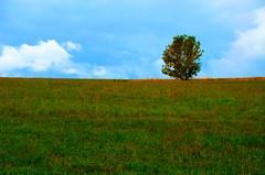 Green field (FailureCriteria) Tags: sky tree nikon westerwald westerburg