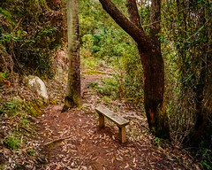 Little forest path (MTRobot) Tags: seat path forest bench bush tree garden bushwalk trees nature landscape