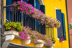 Some lovely flowers on balconies in Venice Italy.  Very colorful buildings.