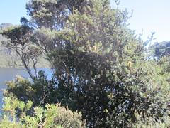 IMG_3783 (shearwater41) Tags: australia tasmania cradlemountain dovelake