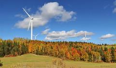 AUTUMN SCENERY |  FALL COLOURS  |  HORIZONTAL AXIS WIND TURBINES | GASPESIE |  QUEBEC  |  CANADA (J P Gosselin) Tags: autunm scenery | fall colours horizontal windmills gaspesie quebec canada axis wind turbines canon 7d 7dmarkii rebel t2i canonrebelt2i eos canon7d markii rebelt2i canonrebel canont2i eost2i eos7d eos7dmarkii mark 2 mark2 eos7dmark2 canon7dmarkii ii canoneosrebelt2i canoneos7d canoneos ph:camera=canon autumn reford gardens jardins de métis