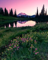 Tipsoo Lake (MagicPixls) Tags: milkyway mtrainier tipsoolake wildflowers