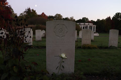 Gravestone with a single rose leant against it - in colour (kimberley07) Tags: brookwood woking surrey military cemetery grave autumn october remeberance