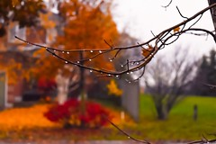 After the rain (sruthyanu) Tags: pretty beautiful beauty nature garden outside outdoors leaves leaf water happy me d5500 nikon nikkor flickr bokeh branch droplets red green orange autumn october season canada ontario colours colour fall rain