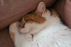 I`m smileycat......... (KvikneFoto) Tags: katt cat åsta tamron nikon