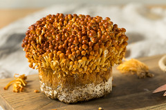 Organic Raw Golden Enoki Mushrooms (brent.hofacker) Tags: agriculture appetizing asian background brownenokimushrooms bunch cooking cuisine delicacy edible enoki enokimushroom enokimushrooms enokitake food fresh freshness fungus golden goldenenokimushrooms goldenmushrooms gourmet group health healthy healthyfood heap ingredient japanese mushroom mushrooms natural nature needle nourishment nutrition organic plant raw tasty traditional uncooked vegetable vegetarian