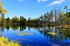 Water Reflections (SusanW<images>) Tags: lilypads trails 1635mm dslr photography landscape pond trees outdoors travels naturewalk waterreflections