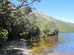 IMG_3767 (shearwater41) Tags: australia tasmania cradlemountain dovelake tree lake