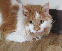 Clive - 6 year old neutered male