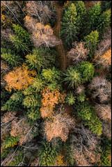 Sandsund vandringsled (Jonas Thomén) Tags: sandsund vandringsled hikingtrail skog forest woods trees träd aspen asp tall spruce trail stig path drone drönare dji mavic air 40m