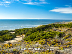 Portugal 2017-9041998-2 (myobb (David Lopes)) Tags: 2017 allrightsreserved atlanticocean europe nazare portugal absence beach copyrighted green landscape nature nopeople ocean outdoor plant sand scenicnature seascape shrub sky tourism touristattraction tranquilscene tranquilty traveldestination vacation water watersedge ©2017davidlopes