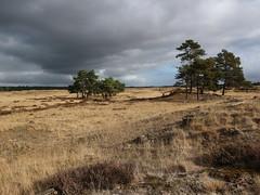 De Hoge Veluwe, The Netherlands (WanderingWim) Tags: hogeveluwe thenetherlands nationalpark hiking outdoors nature sanddunes sunlight