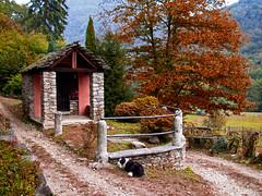 Autunno in Valle Intrasca. (frank28883) Tags: autunno autumn automne otoño foliage foliage2018 valleintrasca foglieingiallite cappella cane sentiero path