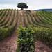 Amanecer en la Rioja 1.