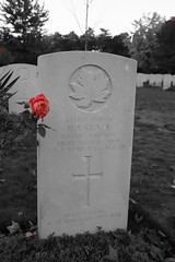 Grave with pink rose in colour (kimberley07) Tags: brookwood woking surrey military cemetery grave autumn october remeberance