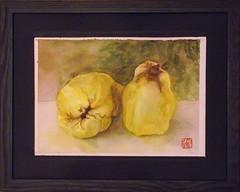 SL_COING_DSCF8412 (s.lehoux-arts) Tags: coing fruits automne quinces yellow jaune stilllife naturemorte sylvielehouxarts illustration watercolor