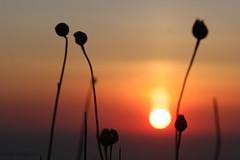 (Mireille Muggianu) Tags: bouchesdurhone cassis europe france provencealpescotedazur coucherdesoleil mer paysage sunset samsungnx nx500