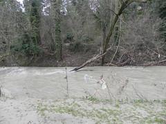 DSCN9938 (Gianluigi Roda / Photographer) Tags: springtime april 2013 creek creeks trash garbage humanwaste humancivilisation