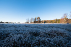 Frosty meadow (JohannesLundberg) Tags: västerön sedge färnebofjärdensnationalpark frost sweden scandinavia europe floodmeadow autumn skandinavien gysinge gävleborgcounty se