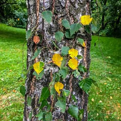 Early fall (Jerzy Durczak) Tags: fall autumn tree leaves