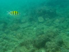Under the sea (xythian) Tags: hi kauai