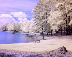 Bench on the Lake (Neal3K) Tags: kolarivisionmodifiedcamera kolarivisionblueirndvifilter claytoncountywaterauthority lake shoreline trees ir infraredcamera