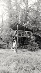 Tree House (MBallard) Tags: texas treehouse abandoned trees ruraldecay decay farm cameraphone samsung galaxys7 blackandwhite