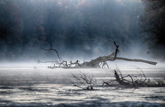 mystic morning (drummerwinger) Tags: rot isar münchen ismaning garching fog foggy nebel canon 80d