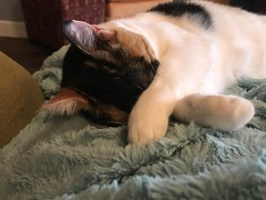 Cat Relaxation By Patsy (pam's pics-) Tags: kitteh kitty feline pamspics pammorris domesticcat iphone7 appleiphone cameraphone cellphonephotography photography mobilephonephotography sleeping asleep relaxing