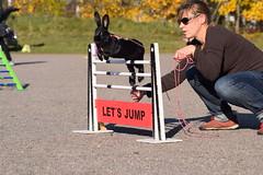 DSC_0167 (klawerjanina) Tags: bunnyjump bunny kani kaniestekisat kanin kaninhoppning