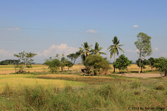 I_B_IMG_0498 (florian_grupp) Tags: asia myanmar burma train railway railroad bago pegu nyaungkashe myanmarailways southeast metergauge metregauge 1000mm diesel locomotive railtruck