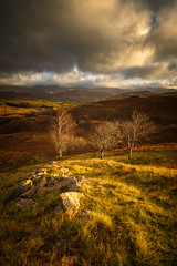 the trees of holme fell (akh1981) Tags: holmefell autumn beautiful cumbria clouds countryside fells mountains moody nikon nisi nature nationalpark nisifilters nationalheritage nationaltrust nationalheritagesite benro valley travel trees rocks wideangle walking outdoors uk unesco sunrise sky landscape lakedistrict