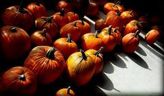 pumpkin lib (milomingo) Tags: outdoor nature pumpkin orange fall autumn light shadow food edible fruit wintersquash contrast photoborder texture organic bold bright vivid vibrant colorfulworld