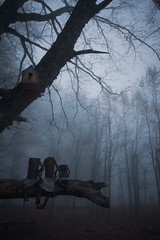 Three little fellas (Ali Sabbagh) Tags: light day dreamy eos7d canon world travel landscape weather trees wood mistery fog